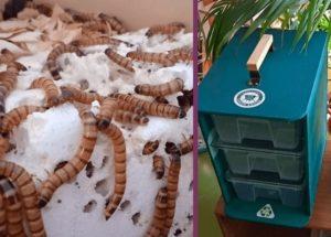 Экологичный стартап: жуки съедят пластик у вас дома